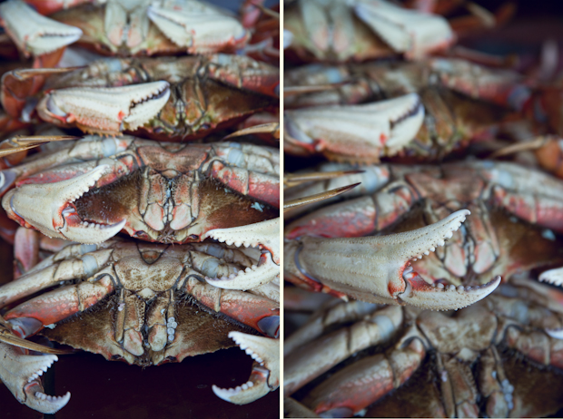 crabs_california-2.jpg