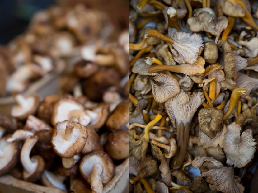 duo_mushroom_2.jpg